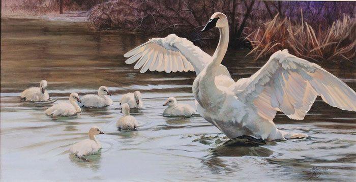 famille de cygne sur lac